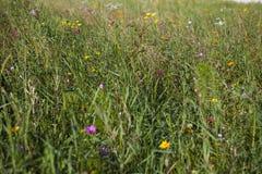Pré coloré de wildflower Photo stock