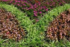 Pré décoratif des fleurs Image libre de droits