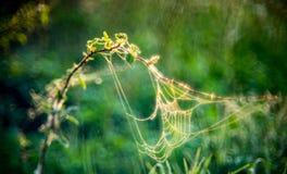 Pré d'été avec des toiles d'araignée images libres de droits