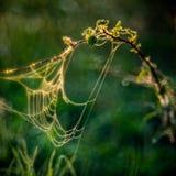 Pré d'été avec des toiles d'araignée photos libres de droits