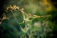 Pré d'été avec des toiles d'araignée Images stock