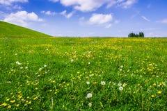 Pré d'été avec les fleurs sauvages sur le paysage accidenté images stock