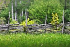 Pré d'été avec une barrière en bois Photographie stock