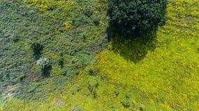 Pré d'été d'herbe verte avec le buisson Photos libres de droits