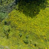 Pré d'été d'herbe verte avec le buisson Image libre de droits