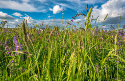 Pré d'été sur le fond de ciel bleu Image stock
