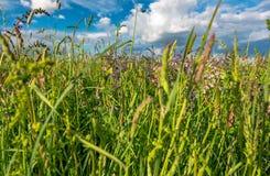 Pré d'été sur le fond de ciel bleu Image libre de droits