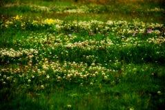 Pré d'herbe Photo libre de droits