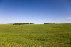 Pré d'herbe Image stock