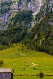 Pré d'herbe dans Koenigssee, Konigsee, parc national de Berchtesgaden, Bavière, Allemagne image libre de droits