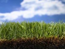 Pré d'herbe de livre Image libre de droits