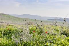 Pré d'herbe sauvage avec l'élevage cultivé sur le fond Images stock