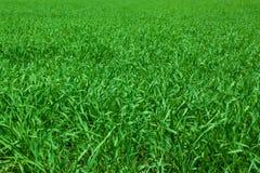 Pré d'herbe verte Photo libre de droits