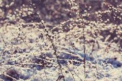 Pré d'hiver Image libre de droits