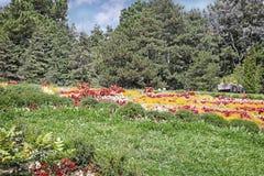 Pré dans l'arborétum, décoré de belles fleurs Photographie stock