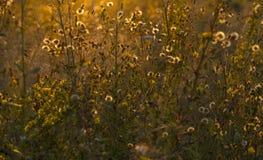 Pré dans le coucher du soleil Photographie stock libre de droits