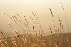 Pré dans les couchers du soleil sur la montagne Image stock