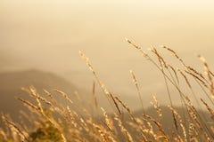 Pré dans les couchers du soleil sur la montagne Images libres de droits