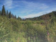 Pré dans une forêt Images libres de droits