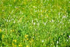 pré de campagne de milieu de l'été avec des fleurs Images libres de droits