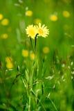 pré de campagne de milieu de l'été avec des fleurs Image stock
