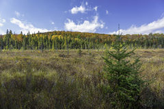 Pré de castor en automne - Ontario, Canada Photographie stock