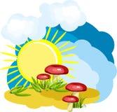 Pré de champignon de couche un jour chaud d'été Photographie stock