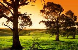 Pré de coucher du soleil Image libre de droits
