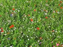Pré de fines herbes d'été Image libre de droits