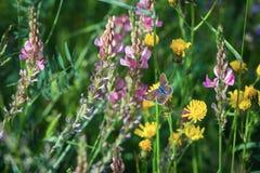 Pré de fleur Photos stock