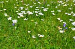 Pré de fleur Images libres de droits