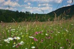 Pré de fleur Images stock