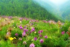 Pré de fleur Photo libre de droits