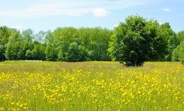 Pré de fleur Photos libres de droits