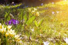 Pré de fleur au printemps Photographie stock libre de droits