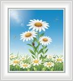 Pré de fleur avec des camomilles Image stock