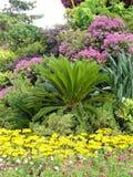 Pré de fleur avec des couleurs lumineuses Photographie stock libre de droits