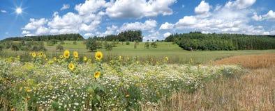 Pré de fleur avec des tournesols Photographie stock libre de droits