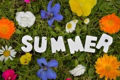 Pré de fleur des textes d'été Photo libre de droits