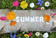 Pré de fleur des textes d'été Photographie stock libre de droits