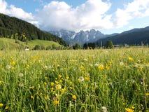 Pré de fleur par Alps Photographie stock