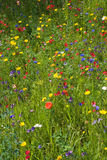 Pré de fleur sauvage Photographie stock libre de droits