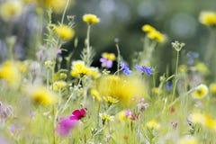 Pré de fleurs sauvages photo libre de droits