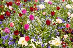 Pré de floraison de source Photographie stock