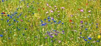 Pré de floraison de wildflower Photos libres de droits