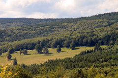 Pré de forêt Photographie stock libre de droits