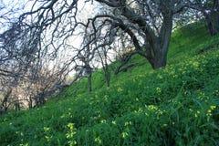 Pré de forêt Photo libre de droits
