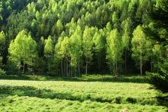 Pré de forêt au printemps image stock