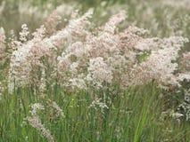 Pré de forêt avec les herbes sauvages Photo stock