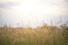 Pré de forêt avec les herbes sauvages Photographie stock libre de droits